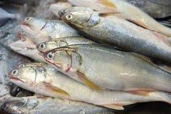 Fisk på is royaltyfri fotografi