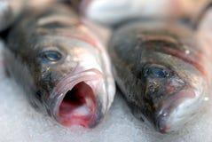 Fisk på is royaltyfria foton