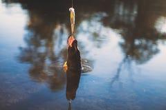 fisk på en krok arkivfoto