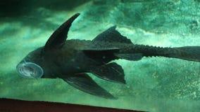 Fisk på exponeringsglas Arkivbild