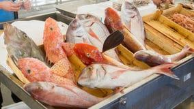 Fisk på fiskmarknaden i Trapani Arkivfoto