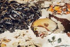 Fisk på isen Arkivbilder