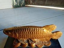 Fisk på mynt royaltyfria bilder