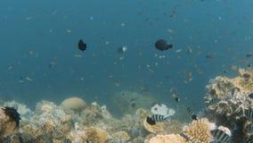 Fisk på skott för korallrev stock video