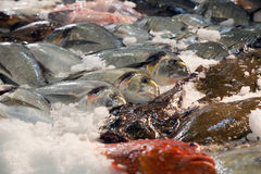 Fisk på spanjormarknadsräknare Arkivfoton