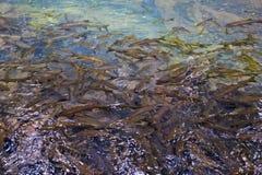 fisk på vatten Arkivbild