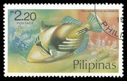 Fisk Picasso Triggerfish Royaltyfria Bilder