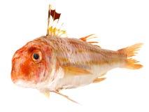 Fisk - röd multefiskar royaltyfria bilder