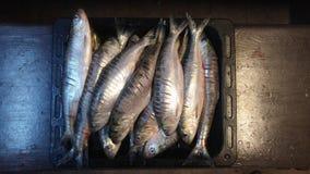 Fisk som är förberedd för att grilla Arkivbild