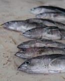 Fisk som är till salu på Barkha Fish Market, Muscat Royaltyfri Foto