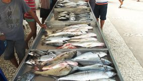 Fisk som är till salu på en marknad på copacabanastranden i rio lager videofilmer