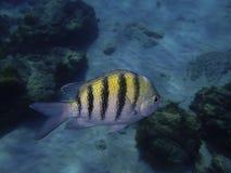 Fisk som är undervattens- i hav Arkivbilder