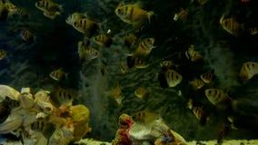 Fisk som är undervattens- i havet Fiska badet i video ett hav av det härliga havet Royaltyfri Bild