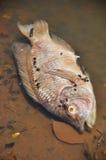 Fisk som absolut svävar Fotografering för Bildbyråer