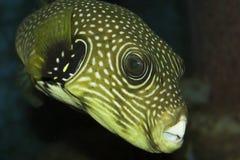 fisk som interresting royaltyfri foto