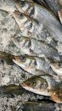Fisk som kylas i is Royaltyfri Bild