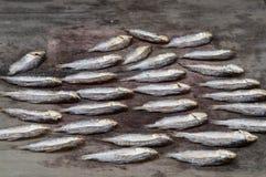 Fisk som lämnas att torka royaltyfri foto