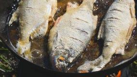Fisk som stekas i olja i panna lager videofilmer