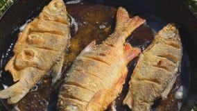 Fisk som stekas i olja i panna arkivfilmer