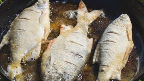 Fisk som stekas i olja i panna stock video