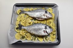 Fisk två med guling för potatisvitsvart Royaltyfri Foto