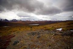 Fisk vandring för sjöslinga, Whitehorse, Yukon nedgånglandskap Royaltyfri Fotografi