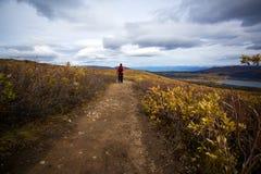 Fisk vandring för sjöslinga, Whitehorse, Yukon nedgånglandskap Fotografering för Bildbyråer