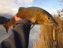 Fiska royaltyfri fotografi