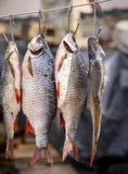 Fiska att ramma i våg som hänger på en järnkrok royaltyfri bild