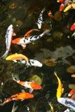 fiska damm Arkivbild