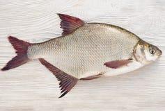 Fiska en braxen Arkivfoto