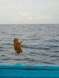 Fiska en Mero havsaborre Royaltyfri Foto