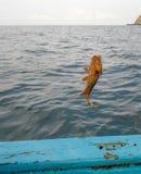 Fiska en Mero havsaborre Arkivbilder