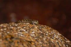 Fiska förklädet sitter på en sten Arkivfoton