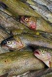 fiska försäljningen Arkivbilder