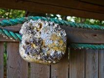 Fiska flötebojet och ett netto som hängs på en vägg Royaltyfri Fotografi