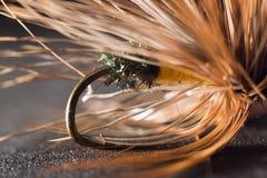 fiska fluga Närbild Arkivfoto