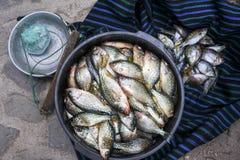Fiska från sjön Atitlan på marknaden av San Marcos royaltyfria bilder