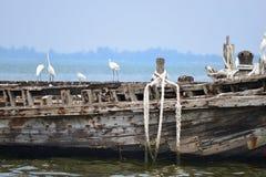 fiska gammal ship Arkivfoto