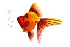 fiska guld- Arkivfoto