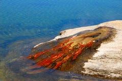 Fiska hålet Arkivfoto