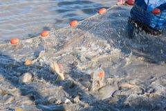 Fiska i dammet Arkivbilder