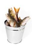 Fiska i en hink på en vit bakgrund Arkivbilder