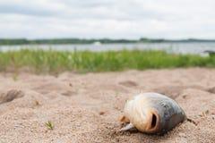 Fiska i sanden Arkivfoto