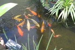 Fiska i växthus på konungen Rama som offentlig IX parkerar royaltyfria foton