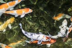 fiska koien Royaltyfria Bilder