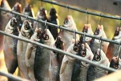 Fiska mörten, torkas att ramma, når att ha gravat och du har blött Special ask för skydd mot flugakryp Rimmat och royaltyfri fotografi