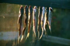 Fiska mörten, torkas att ramma, når att ha gravat och du har blött Special ask för skydd mot flugor och kryp royaltyfri bild