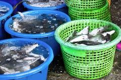 fiska marknaden Royaltyfria Bilder
