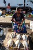 Fiska marknaden i Colombo, Sri Lanka Royaltyfria Bilder